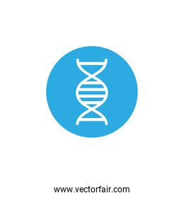dna molecule , block and flat style icon