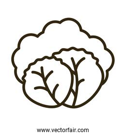 lettuce leaves on white background, line style icon