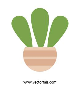 cactus with potted on white background