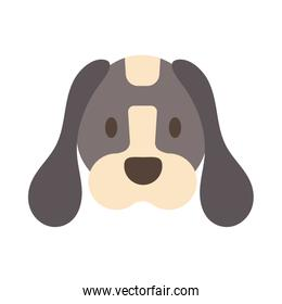 head of cute dog on white background