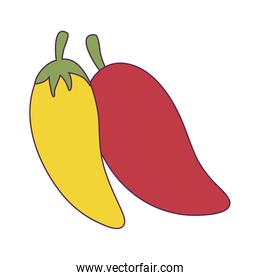 Isolated chillis vegetable vector design