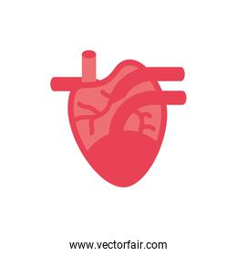 Isolated heart icon vector design