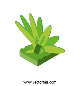 Isolated isometric grass vector design