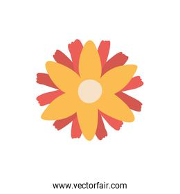 Isolated yellow flower flat style icon vector design