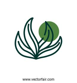Isolated natural leaves half line half color style icon vector design
