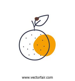 Isolated orange fruit line color style icon vector design