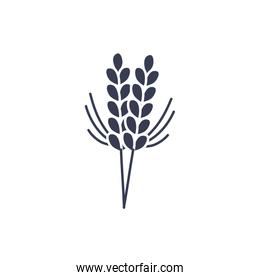 Isolated wheat ear silhouette style icon vector design