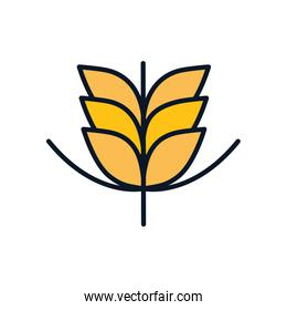 Isolated wheat ear line fill style icon vector design