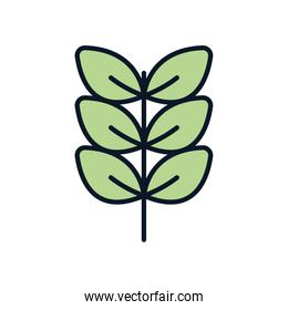 Isolated natural leaves line fill style icon vector design