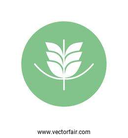 Isolated wheat ear silhouette block style icon vector design