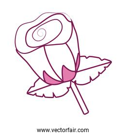 Isolated rose flower line fill style icon vector illustration
