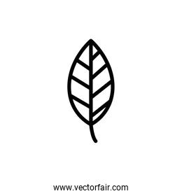 Isolated leaf icon line vector design