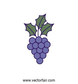 grapes fruit fill isolated design