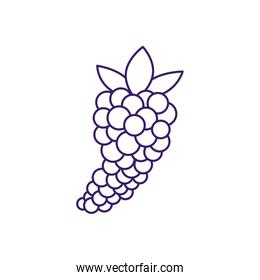 Isolated grapes fruit line style icon