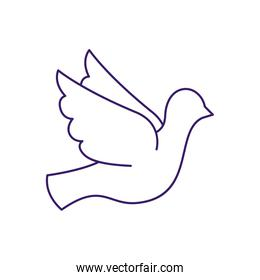 Isolated dove bird line vector design