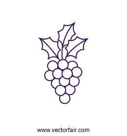 Isolated grapes fruit line vector design