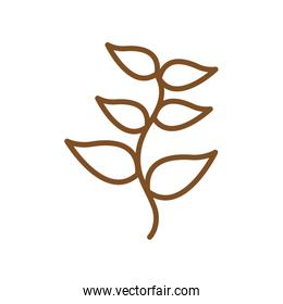 Isolated natural leaves line style icon vector design