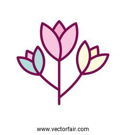 Isolated flowers line and fill style icon vector design