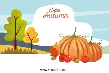 hello autumn season scene with pumpkins in landscape