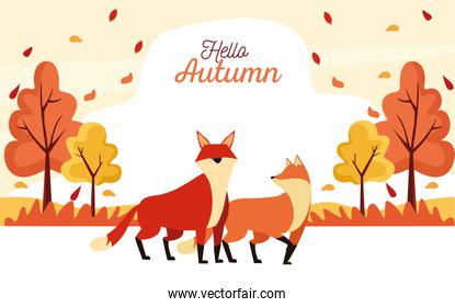 hello autumn season scene with foxes couple