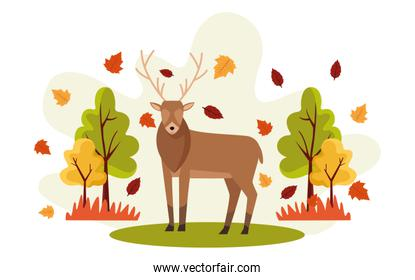hello autumn season scene with reindeer