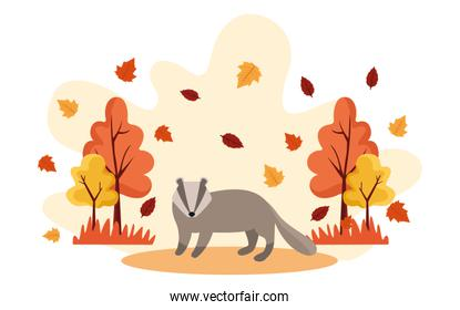 hello autumn season scene with raccoon