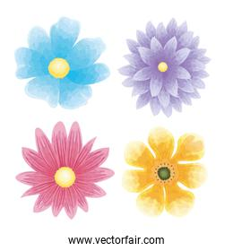 set of color flowers naturals