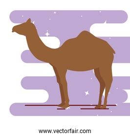 silhouette camel animal isolated icon
