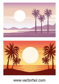 beautiful landscapes with beach and palms scenes