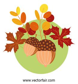 hello autumn season acorns and leafs