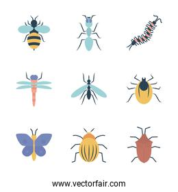bee and insect concept icon set, flat style