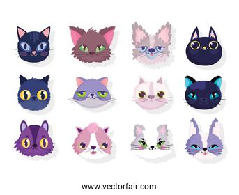 set of faces differents cats domestic cartoon animal pets