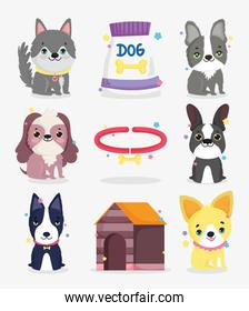 cute little dogs breeds collar dog domestic cartoon animal, collection pets