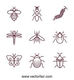 bee and insect concept icon set, line style