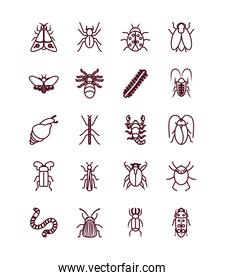 snail and insect concept icon set, line style