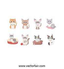 cute dog and cats different cartoon character animals, pets
