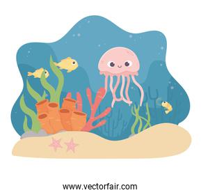 jellyfish fishes starfish shrimp life coral reef under the sea