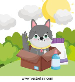 dog in box with food package landscape pets