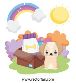 dog puppy with box food landscape pets