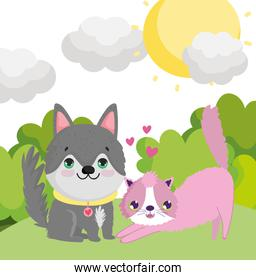 husky dog and cat in the grass outdoor lovely pets