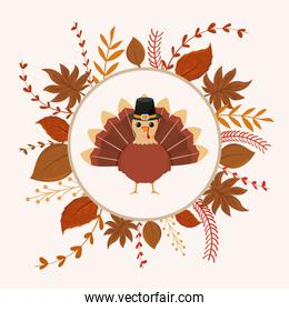 turkey of thanksgiving in the middle of leaves