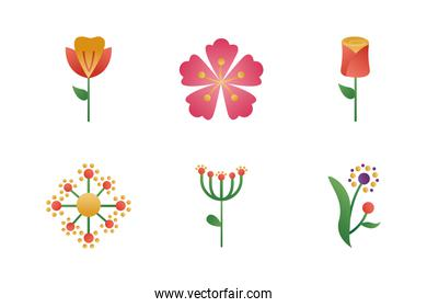 bundle of flowers degradient style icons