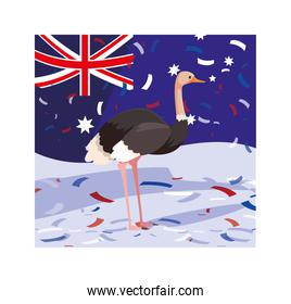 ostrich with australia flag in the background