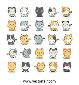 set of cute cats on white background