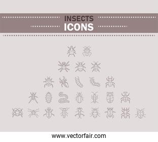 insect icons set, line detail style