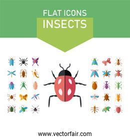 ladybug and insect icon set, colorful and flat style