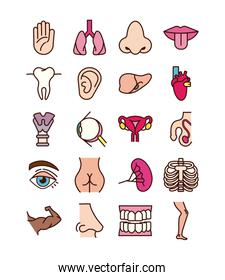 bundle of body parts and organs icons