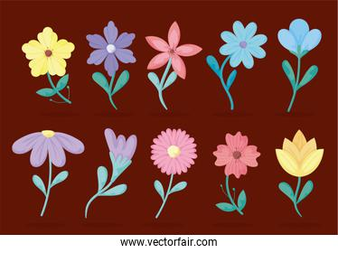 beautiful flowers icon set over red background, colorful design