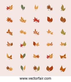 Isolated set of autumn leaves vector design