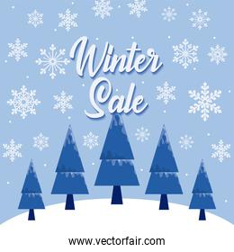 Winter sale with snowflakes and pine trees vector design